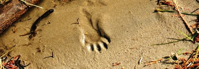 Partial Racoon Track in Sand